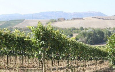 "Collosorbo Brunello Named One of the ""Year's Best Tuscan Reds"""
