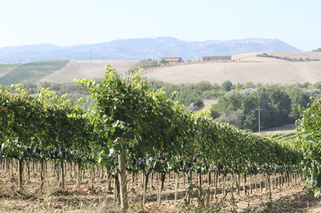 """Collosorbo Brunello Named One of the """"Year's Best Tuscan Reds"""""""
