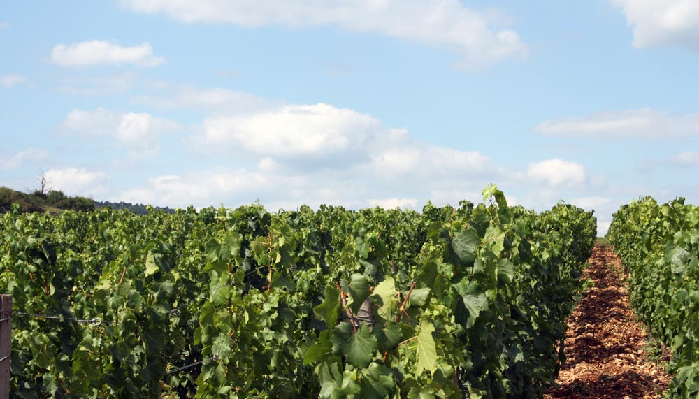 maison frederic magnien burgundy north berkeley imports
