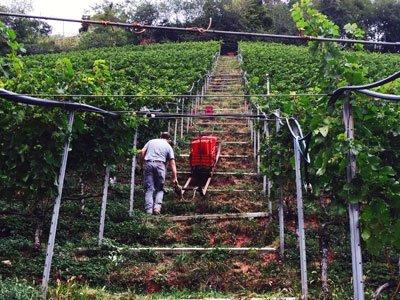 Alto Adige's Kurtatsch Wows Italian Wine Critics
